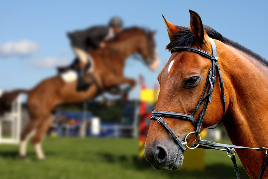 Arena Footing Affects Horse Performance