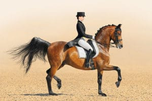 Ideal Dressage Arena Footing