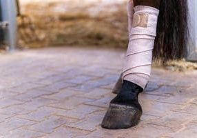 prevent tendon injuries in horses